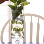 the elevated vase