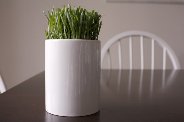 wheat grass. may 2010