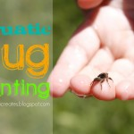 Aquatic Bug Hunt