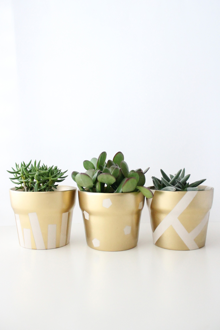 gold pot succulents (18 of 30)
