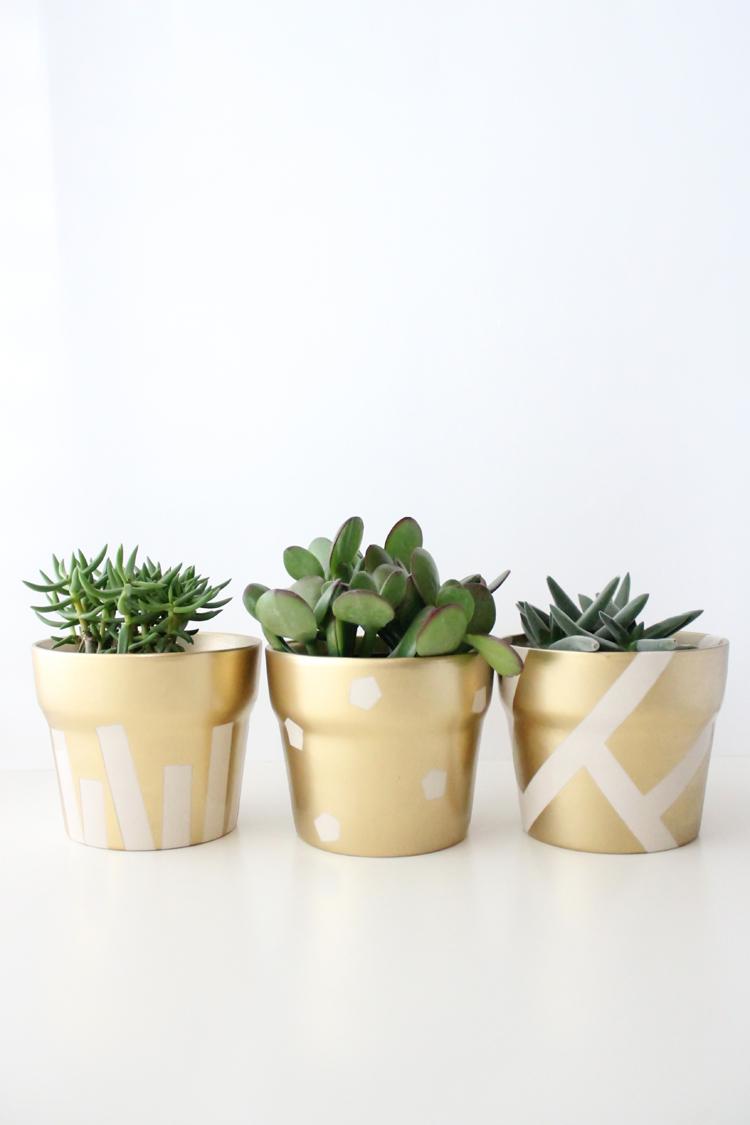 gold pot succulents (18 of 30)