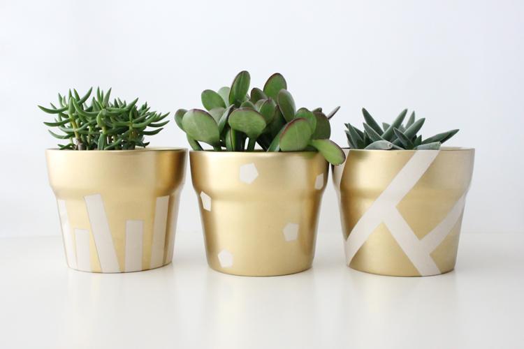 gold pot succulents (19 of 30)