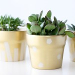 gold pot succulents (21 of 30)