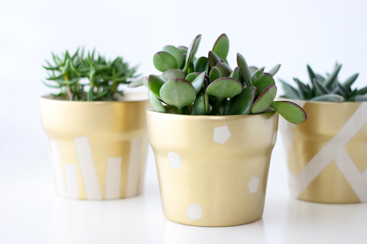 gold pot succulents (21 of 30)