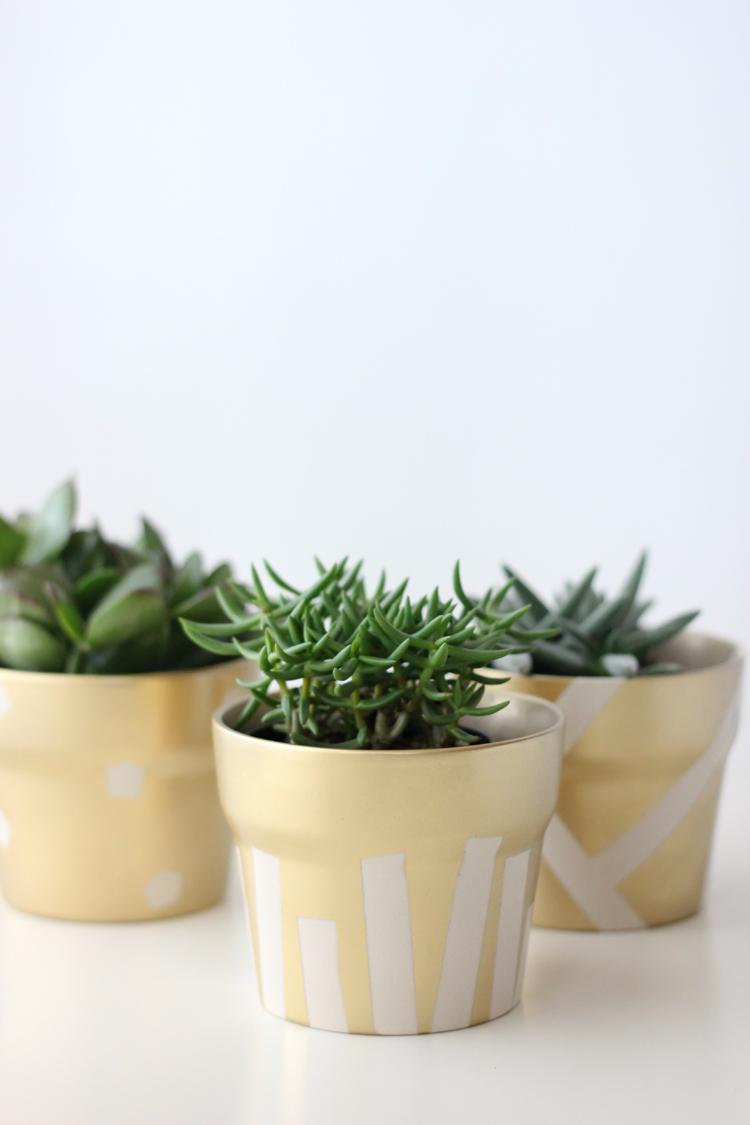 gold pot succulents (29 of 30)