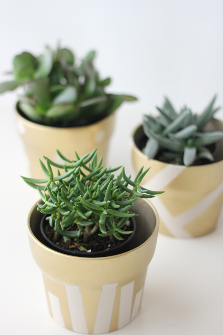 gold pot succulents (30 of 30)