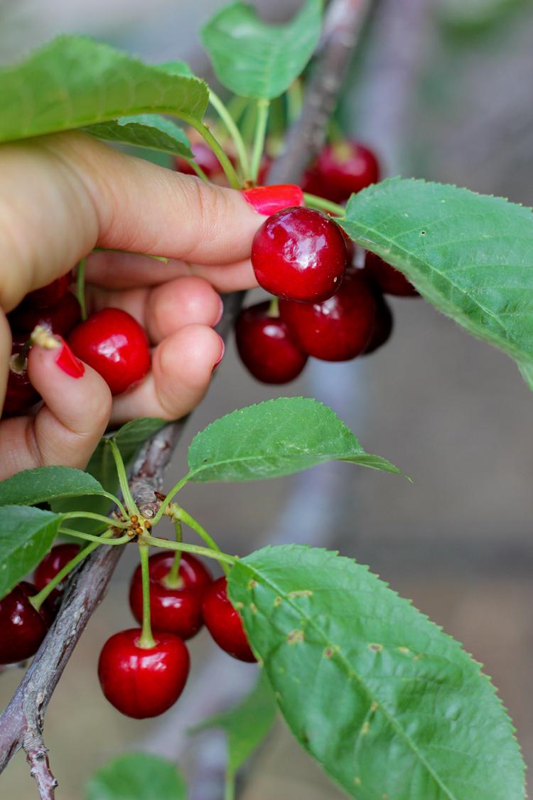 Tips for making your U-Pick Farm visit successful - Delia Creates