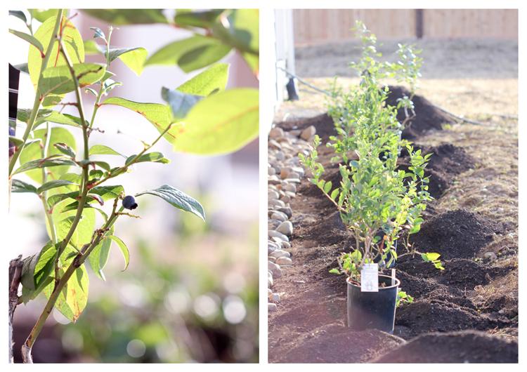 Striped Raised Garden Beds + Edyn Garden Sensor // Delia Creates