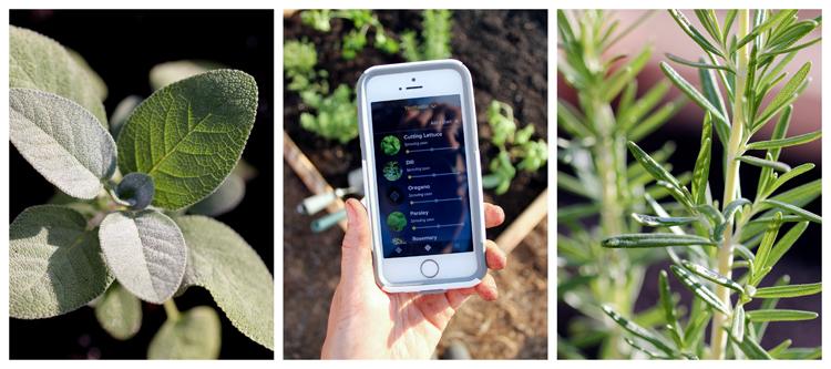 Edyn Garden Sensor Review // Delia Creates