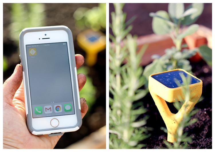 Edyn Garden Sensor // Delia Creates