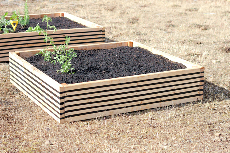 Striped Raised Garden Beds // Delia Creates