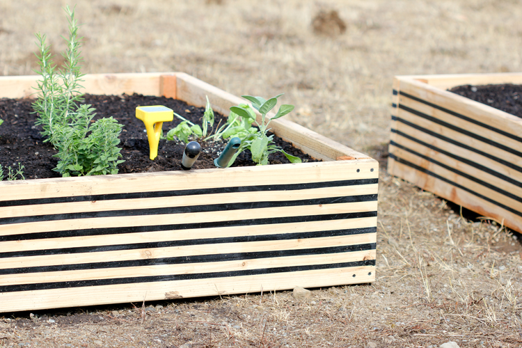 Striped Raised Garden Beds + Edyn Garden Sensor // Delia Creates