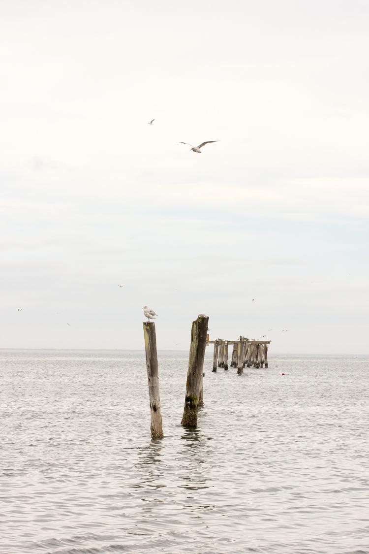 Gulls  // Delia Creates