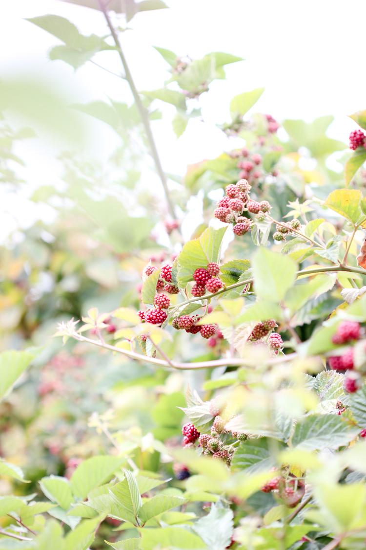 Berry Bucket (60 of 91)0812