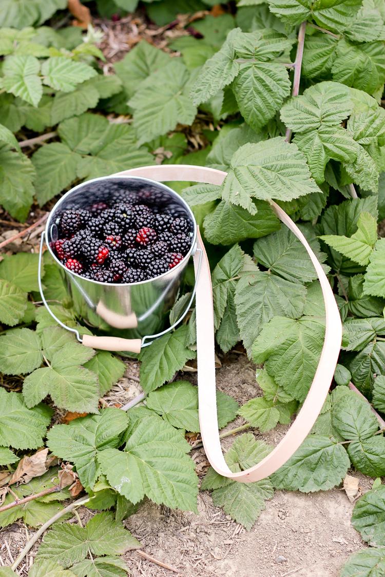 Berry Bucket (69 of 91)0812