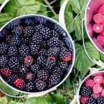 Berry Bucket (86 of 91)0813
