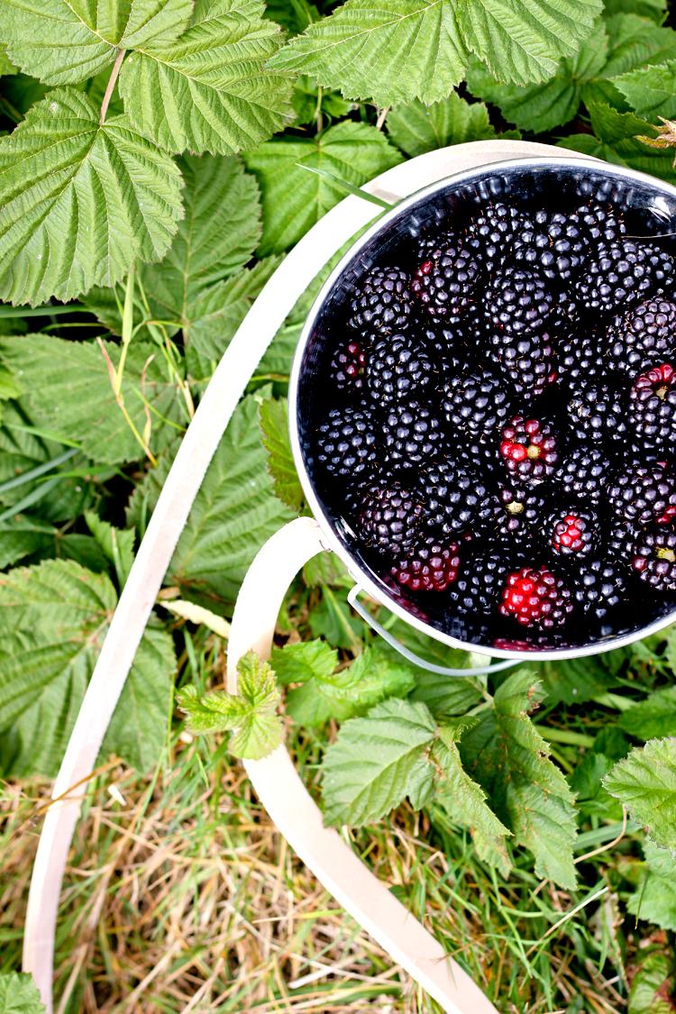 Berry Bucket (88 of 91)0812