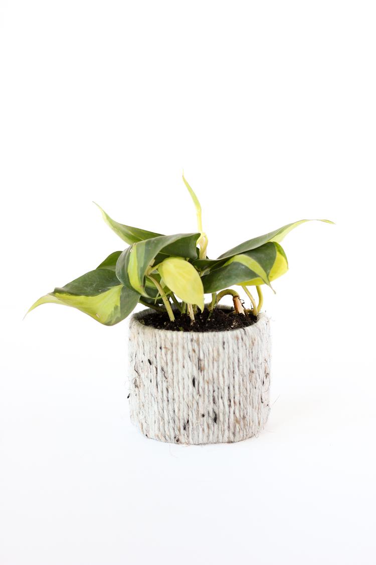 Recycled Plant Cozy Tutorial // www.deliacreates.com