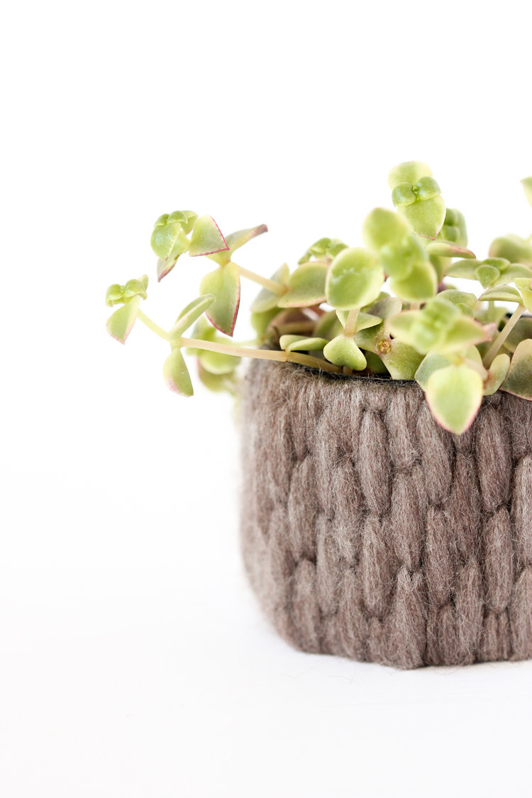 Recycled Plant Cozy Tutorial // www.deliacreates.com