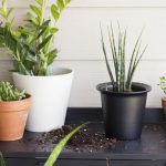 Six Easy Steps to Refresh Your Houseplants for Summer