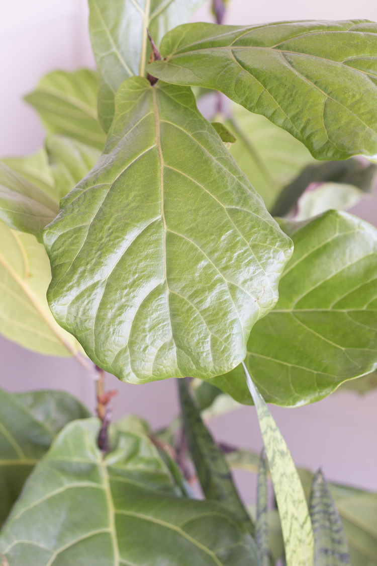 Six Easy Steps to Refresh Your Houseplants for Spring // www.deliacreates.com