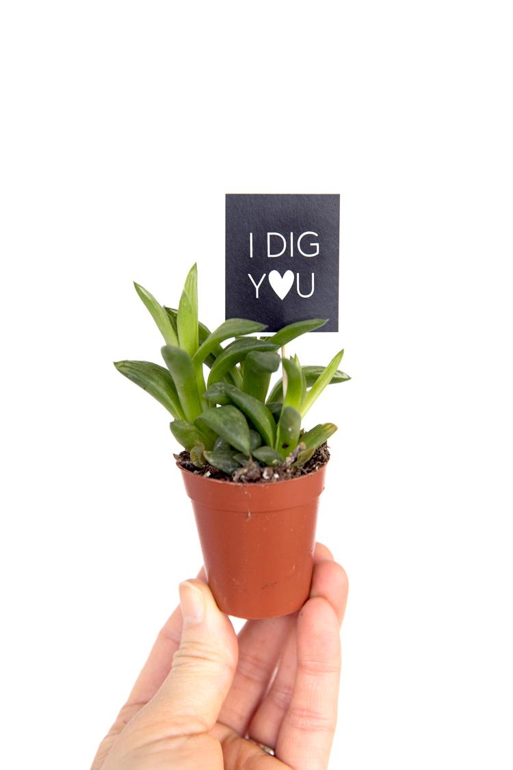 Plant Valentines - FREE PRINTABLE // www.deliacreates.com