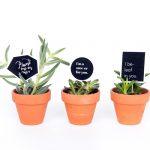Plant Valentines – FREE PRINTABLE
