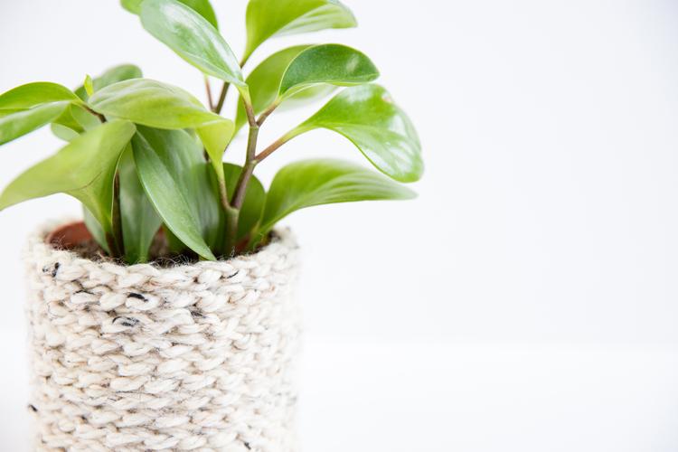 Crochet Basics - How to Chain Stitch + Plant Cozy Tutorial // www.deliacreates.com