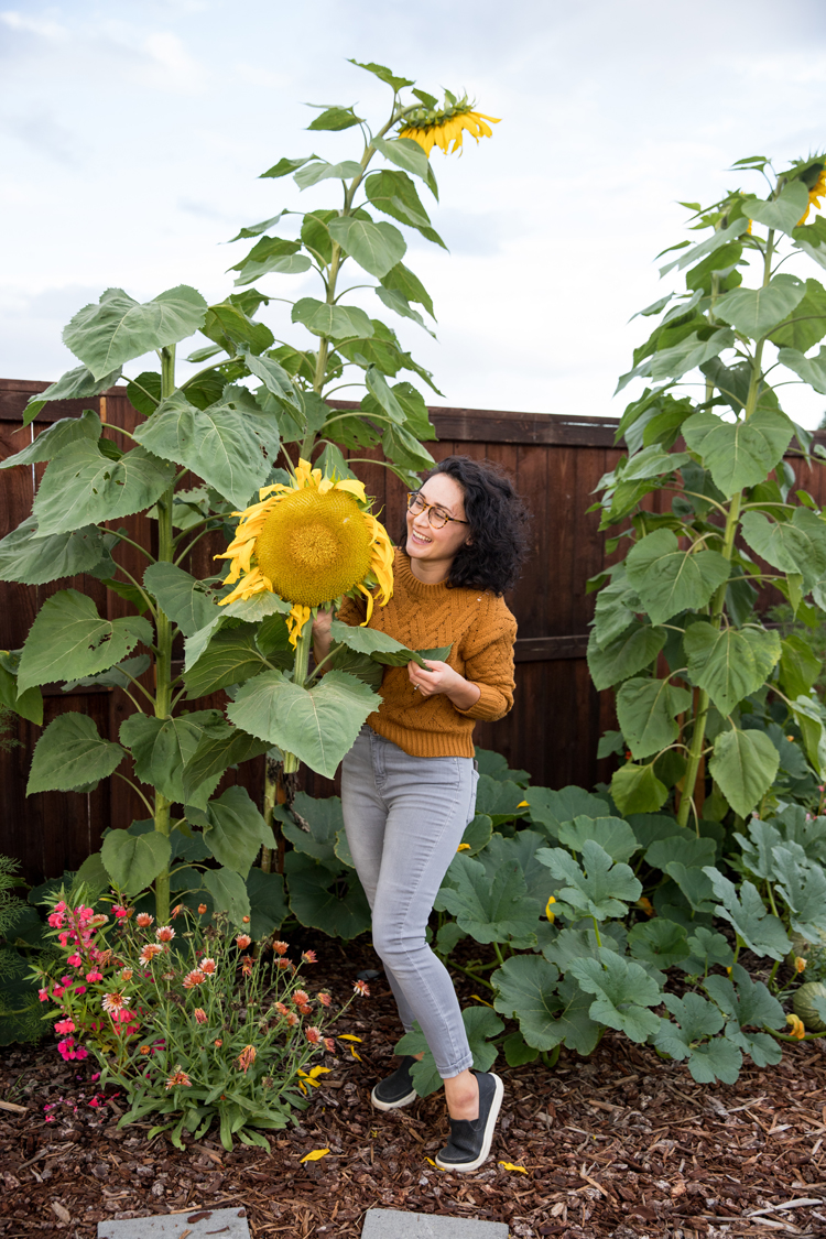 How To Roast a Sunflower Head // www.deliacreates.com