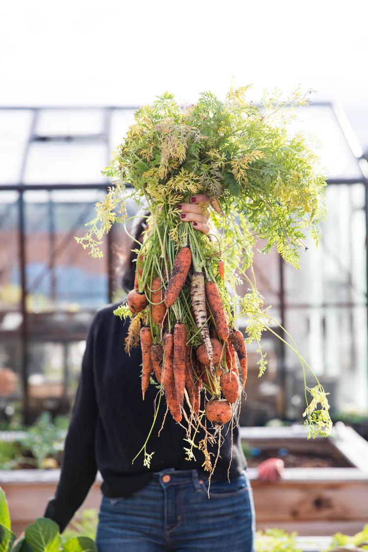 Overwintering Carrots // www.deliacreates.com