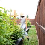 DIY Cement Garden Beds